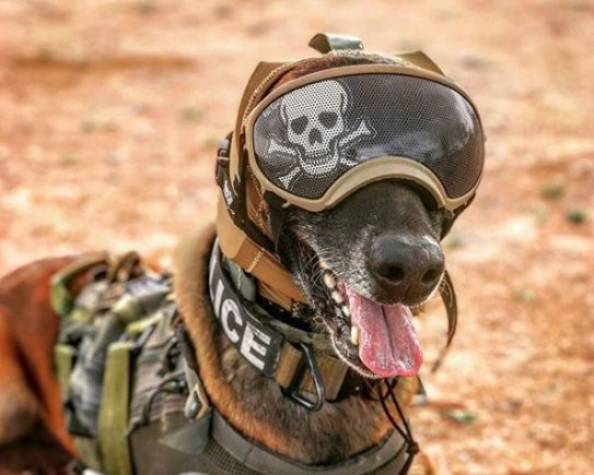 Hearing Protection for K-9s